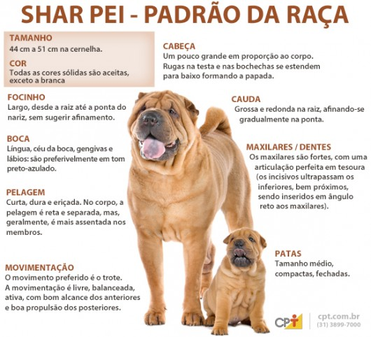 Padrão da raça Shar Pei