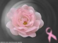 Outubro Rosa: do dia 1º a 31 de outubro, o país se veste de rosa na luta contra o câncer de mama