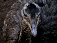 Abatedouro de animais silvestres - correta operação evita crueldades e perdas financeiras