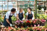 O profissional florista, no exercício da sua profissão, pode trabalhar como proprietário, funcionário de uma floricultura