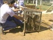 As gaiolas ão estruturas simples com portas do tipo guilhotina