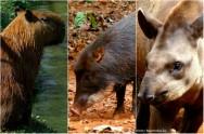 Abatedouro de animais silvestres -  critérios para as instalações do matadouro