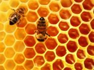 Aprenda Fácil Editora: Criação de abelhas: colmeias racionais