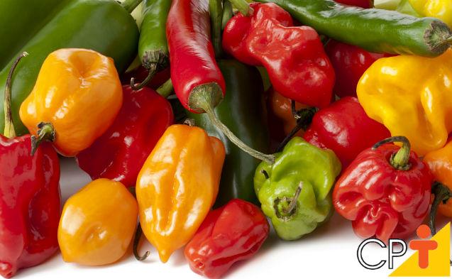 5 pimentas mais ardidas do mundo: vai encarar ou correr?   Artigos Cursos CPT