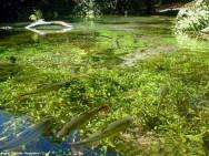 Águas naturais cada vez mais contaminadas transmitem doenças infecciosas no meio rural