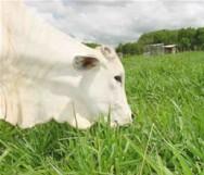 Aprenda Fácil Editora: Plantas tóxicas: inimigos indigestos dos bovinos