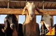 Ovinos em confinamento - consumo de matéria seca e conversão alimentar