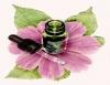Curso de florais ensina a associar as essências na busca pelo equilíbrio emocional