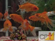 Espécies de peixes ornamentais