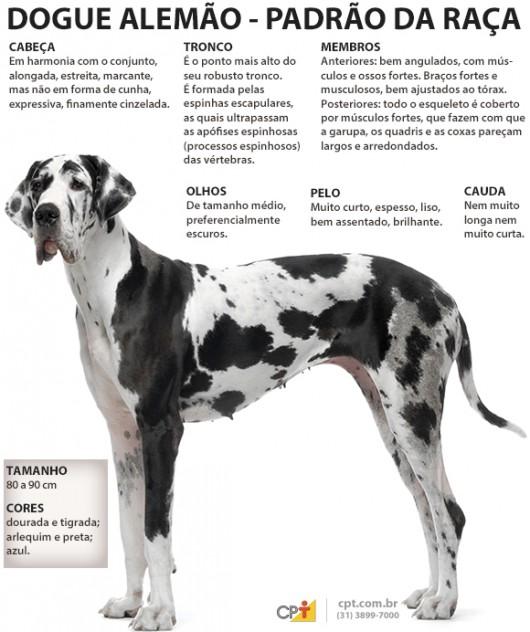 Padrão da raça Dogue Alemão