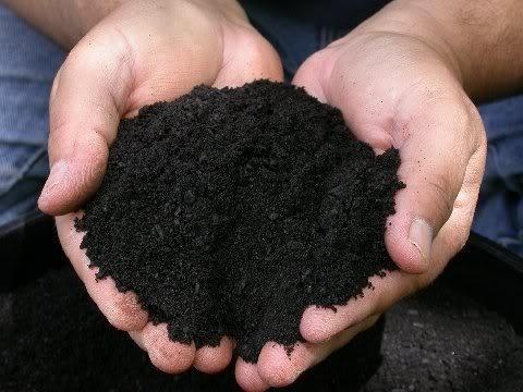 Café orgânico - processo de solarização do substrato para a eliminação dos patógenos. Foto: Reprodução