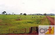 As pastagens degradadas trazem um grande prejuízo econômico e social para uma determinada região ou propriedade.