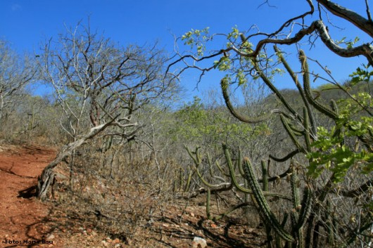 Biomas do Brasil - Caatinga