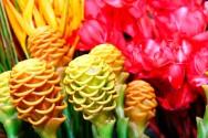 Aprenda Fácil Editora: Cultivo de plantas ornamentais