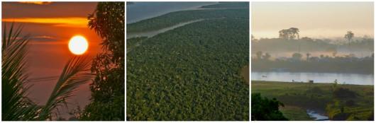 Biomas do Brasil - Floresta Amazônica. Foto: Reprodução