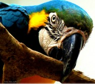 Biomas do Brasil - Amazônia