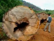 Região de vasta riqueza em recursos naturais, a Amazônia tem grandes estoques de madeira, borracha, castanha, peixes e outros