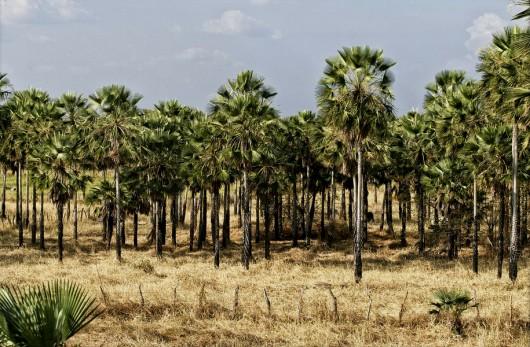 Biomas do Brasil - Zona de Cocais. Foto: Otávio Nogueira