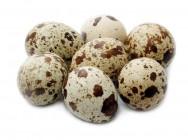 Aprenda Fácil Editora: Criação de codornas: produção de ovos