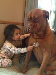 Aprenda Fácil Editora: Examinando o cão para detectar doenças