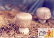 Importância medicinal dos Cogumelos