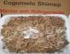 Shimeji tem oferta de mercado menor que a demanda