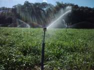 Aprenda Fácil Editora: Irrigação por aspersão: conheça suas vantagens