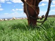 Aprenda Fácil Editora: Aprenda sobre a nutrição de cavalos