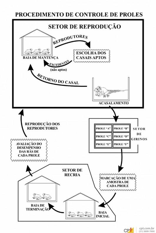Criação de rãs - você sabe como fazer o controle de proles no ranário?