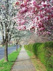 Aprenda Fácil Editora: Arborização de ambientes urbanos: conheça algumas espécies