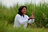 Gramas e gramados - como fazer o controle de plantas daninhas