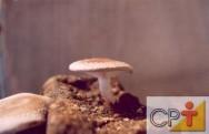 Características biológicas dos cogumelos