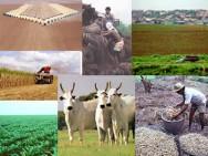 O Brasil é o maior produtor mundial de açúcar, café e suco de laranja, e o segundo produtor mundial de etanol, soja e carne.