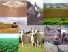 O agronegócio e o mercado