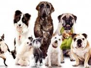 Aprenda Fácil Editora: Conheça as principais raças de cães para adestramento