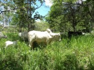 Aprenda Fácil Editora: Pastagem ecológica