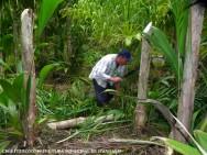 Produção de palmito de Pupunha - cuidados antes do plantio, plantio e adubação