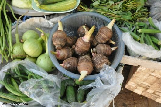 Inhame orgânico - 10 dicas para o sucesso da sua plantação