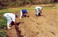 Adubação orgânica e química do solo