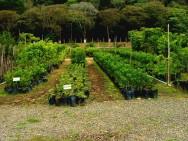 Substratos para mudas arbóreas - terra de subsolo, vermiculita, composto orgânico, esterco bovino e moinha de carvão