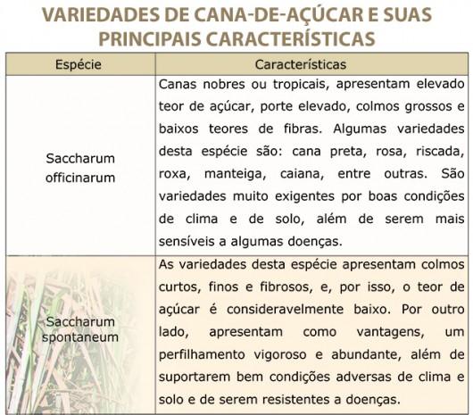 Variedades da cana-de-açúcar e características
