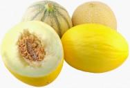 Como cultivar melão - preparo do solo, plantio, desbaste, irrigação, colheita e classificação