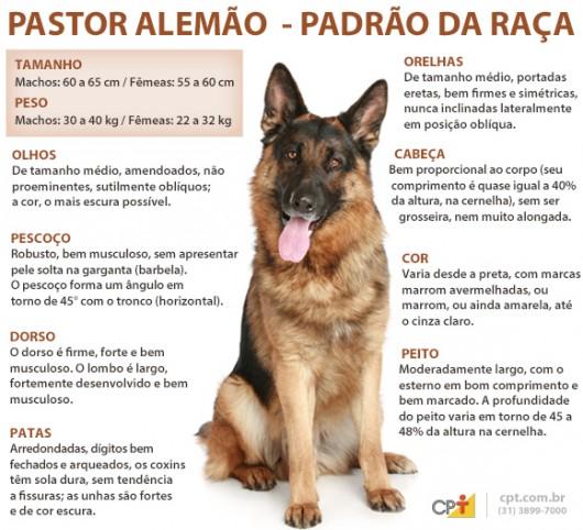 Pastor Alemão a origem