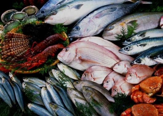 Processamento de pescado - etapas e os tipos ideais de peixe para o beneficiamento