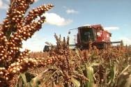 Aprenda Fácil Editora: Colheita mecanizada de grãos: entenda porque acontecem algumas perdas