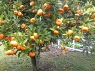 Aprenda Fácil Editora: Dicas para a formação do pomar