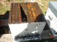 Aprenda Fácil Editora: Iniciando o apiário fixo