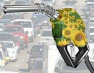 Pinhão-manso é viável para a obtenção do biodiesel, pois produz, no mínimo, duas toneladas de óleo por hectare/ano, levando de três a quatro anos para atingir a idade produtiva.