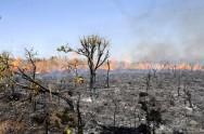 Aprenda Fácil Editora: Conheça a diferença entre incêndio florestal e queimadas florestais