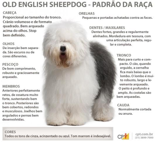 Padrão da raça Old English Sheepdog (Bigtail)